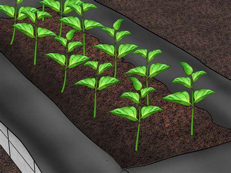 ways  build raised vegetable garden boxes wikihow