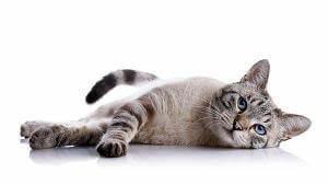 Flöhe Bei Katzen Bekämpfen : fl he bei katzen fl he bek mpfen ~ Orissabook.com Haus und Dekorationen