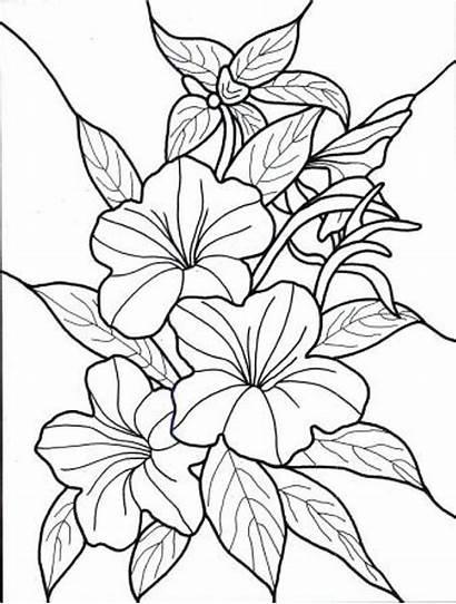 Flores Imprimir Colorear Dibujos Dibujo Imagenes Pintar