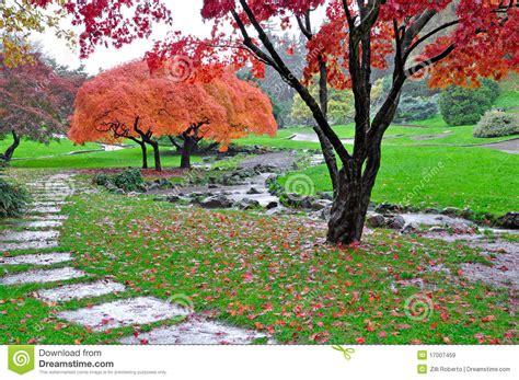 Giardino D'autunno Nell'ambito Della Pioggia Immagine