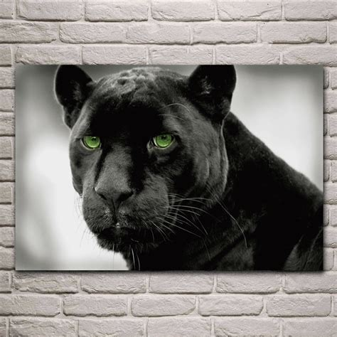 animal panthers selective color black panther green eye
