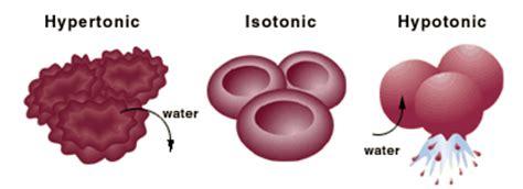 cell membranes problem set