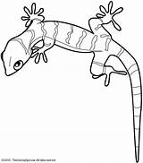 Gecko Coloring Pages Colouring Printables sketch template
