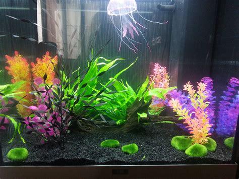 algue malgr 233 l utilisation de tetra aqua pur et tetra filter activ
