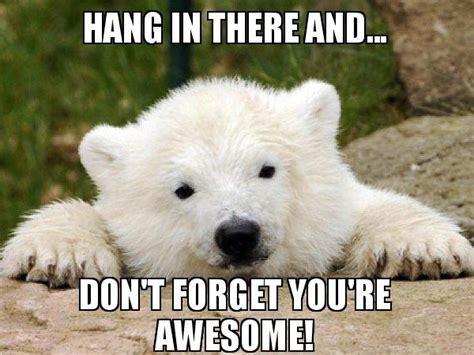 Hang In There Meme - hang in there and don t forget you re awesome popular opinion bear make a meme