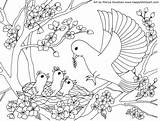 Coloring Birds Mother Bird Pages sketch template