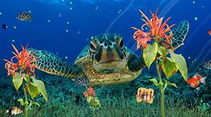 Wonderful Sea Life Aquarium Tropical 3D Screensaver