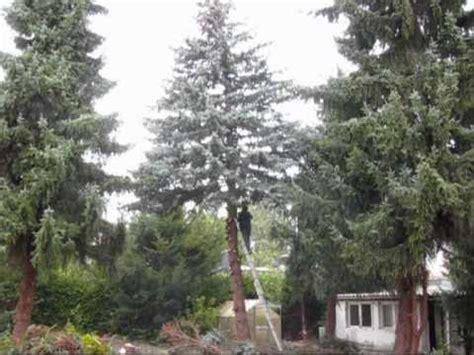 Baum Fällen Im Gartenwmv Youtube