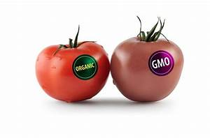Genetically Modified Foods Can Make Or Break Africa  The Debate