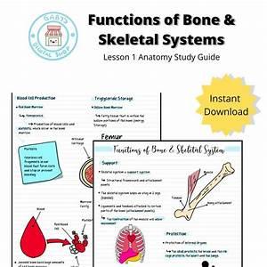 Functions Of Bone  U0026 Skeletal Systems Lesson 1 Anatomy