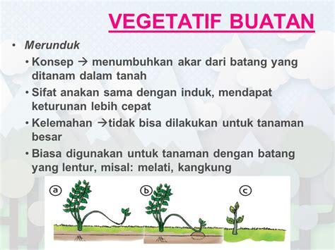 gambar reproduksi vegetatif alami buatan tumbuhan