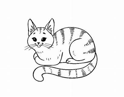 Gato Colorare Gatto Colorir Pintar Giovane Novo