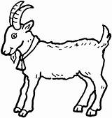 Goat Coloring Billy Pages Baby Supercoloring Colouring sketch template