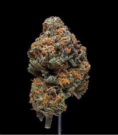 Grape Ape Cannabis Taste Gifs Afghani Breath
