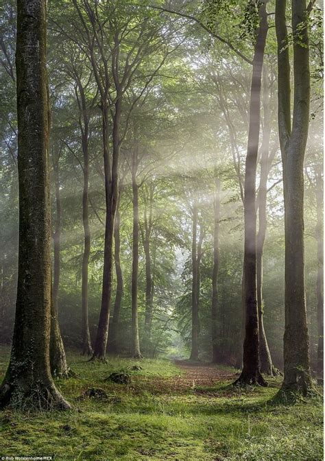 Best 25 Forest Photography Ideas On Pinterest Forests