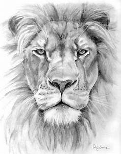 Lion pencil drawing - Patty Storms, Stamford, CT / nice ...