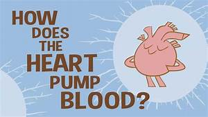 How Does The Heart Pump Blood   U2013 Ted Ed