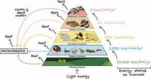 Energy Pyramid Diagram - ThingLink