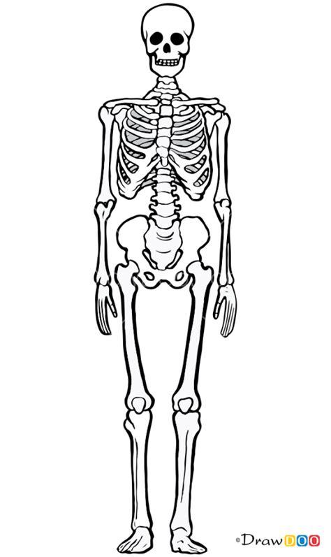 How to Draw Human Bones, Skeletons