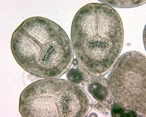 Echinococcosis; Hydatid Cyst; Hydatidosis; Cysts, Hydatid