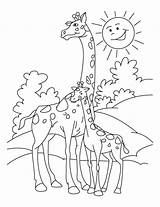 Coloring Giraffe Printable Giraffes Calf Clipart Everfreecoloring Colouring Drawing Sheets Adults Realistic Cartoon Template Templates Mom Animal Library Pdf Popular sketch template