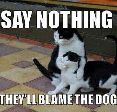 Sequel Memes - galleria fotografica memes felini