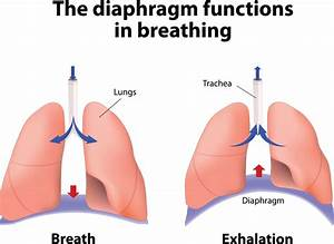 5 01 Respiratory System Function