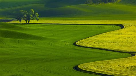 Green Nature Wallpapers Hd Pictures