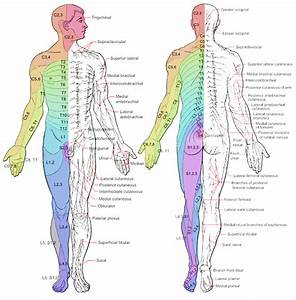9 Best Images of Spinal Dermatomes Chart - Lumbar Nerve ...