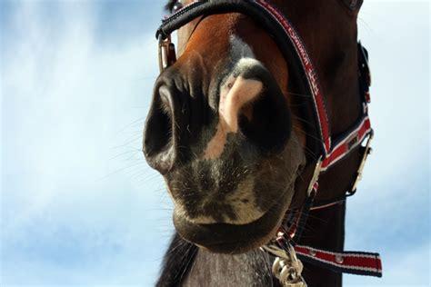 hilfe mein pferd hustet