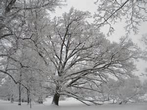 file frosty trees in winter helsinki 6 jpg