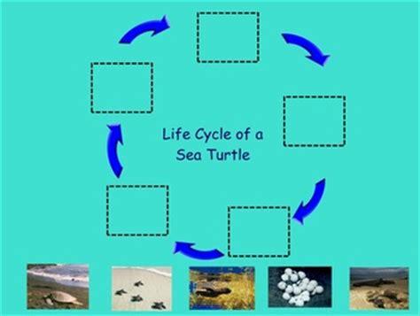turtle life cycle smart   fiction big book