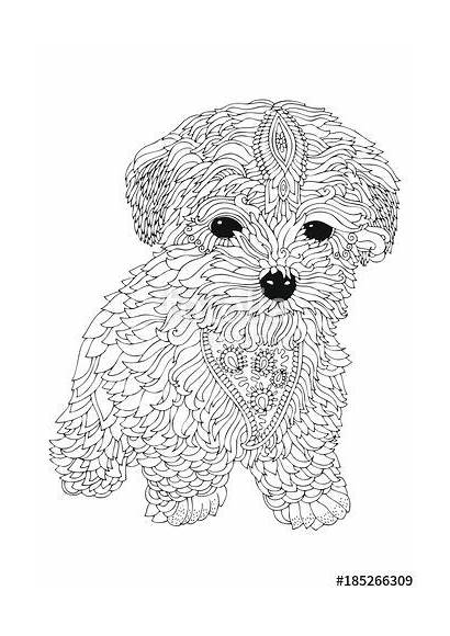 Coloring Pages Dog Adult Puppy Bichon Frise