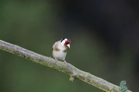feeding birds when to feed garden birds the rspb