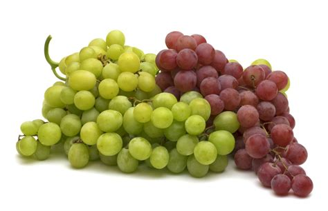 All About Grapes - Blog - Festival Foods