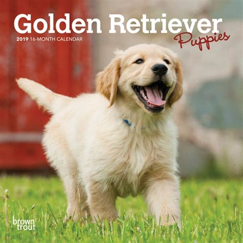 Golden Retriever Puppies 2019 Mini Wall Calendar