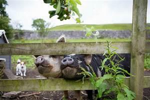 A Unique Farmhouse House Tour Moral Fibres UK Eco