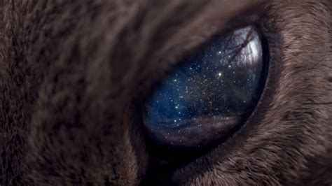 Galaxy Animal Wallpaper - universe space animals galaxy wallpaper no