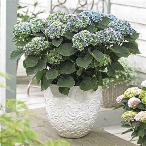 17 beste idee 235 n planten bij de voordeur op voordeur planters veranda