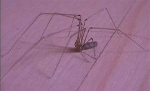 Viele Spinnen Im Haus : die spinnentiere am lebendigen bienenmuseum kn llwald ~ Watch28wear.com Haus und Dekorationen