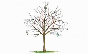 Apfelbaum Wann Schneiden : obstb ume schneiden 10 tipps mein sch ner garten ~ Frokenaadalensverden.com Haus und Dekorationen