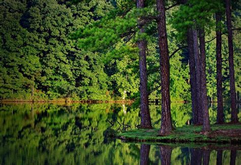 beautiful forest 35 breathtaking forest wallpaper designs