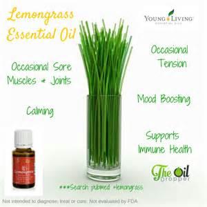 Lemongrass Essential Oil Benefits - The Oil Dropper
