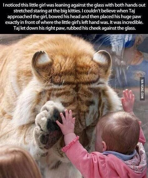 This Warms Cold Heart Wild Animals Cute