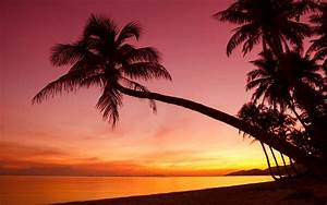 Tropical, sunset, palm trees, silhouette, beach, sea ...