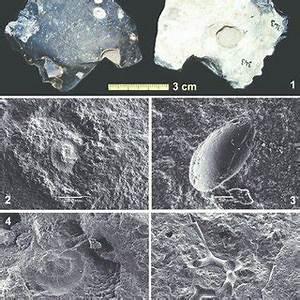 -1 : Type F20, échantillon géologique, Miocène, silex ...