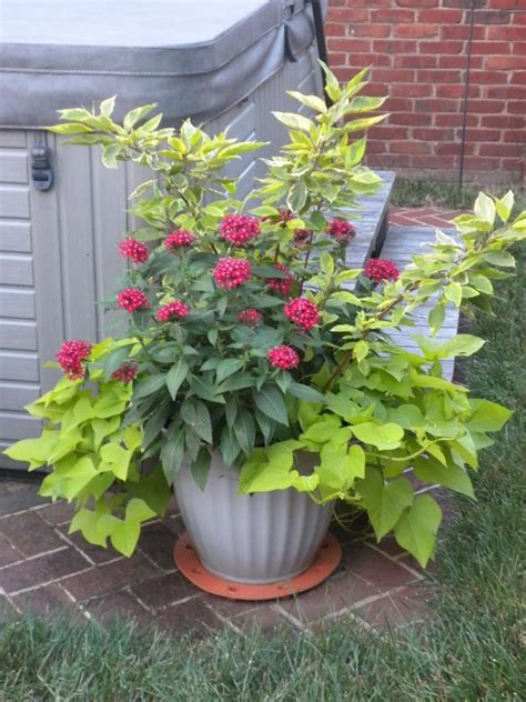 annual flower container