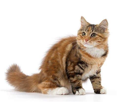 langage du chat comportement du chat parler le chat