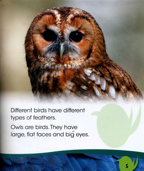 best 28 why do birds need feathers why do owls and