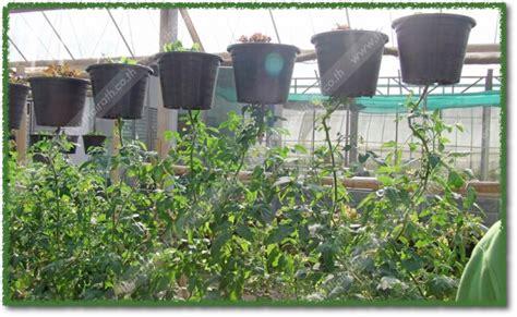 001-การปลูกพืชกลับหัว - คงสวัสดิ์ กรุ๊ป
